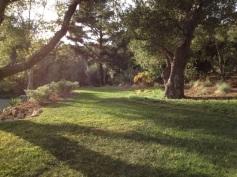 upper lawn 3